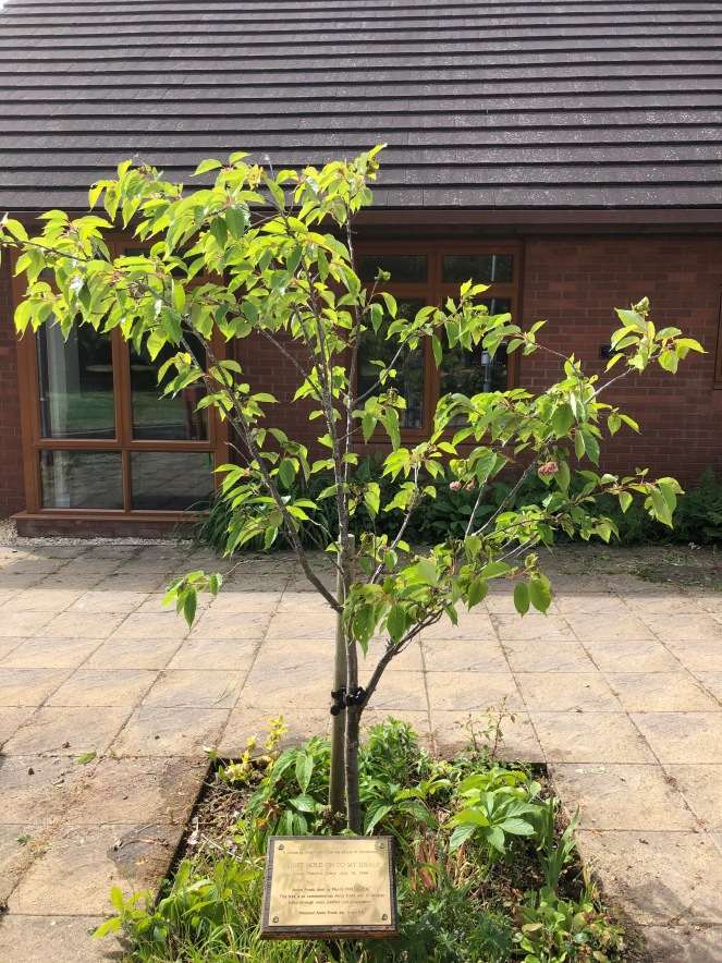 Anne Frank tree Saxon Hall 26 May 2020 (1)